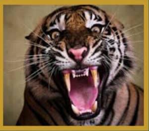tiger-roar-ringtone