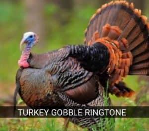 turkey-gobble-ringtone